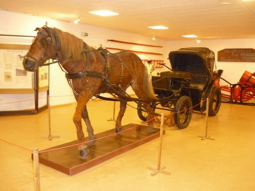 arkliu muziejus
