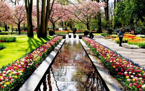 9839 zoomed keukenhof gardens 6 1459426642