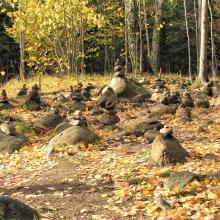Pokainių miškas Лес Покайню 2015   panoramio (2)