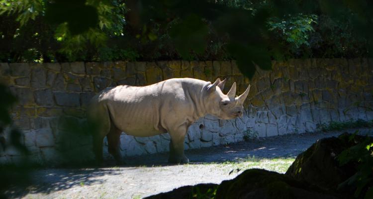 Dvur Kralove Zoo Raganosis 277913274