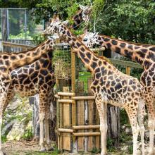 Rygos zoo 319844645