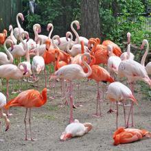 Rygos zoo 82940814