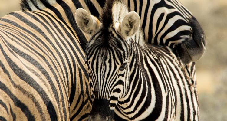 Rygos zoo 176282805